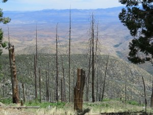 Remnants of the huge fire on Mt. Lemmon several years back.