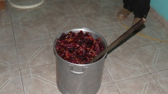 Chiles are in a bucket, waiting to be