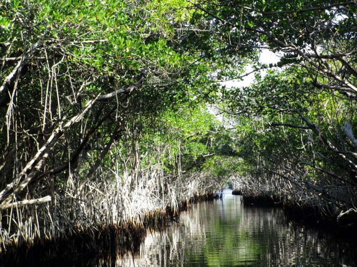 6-mangrove roots
