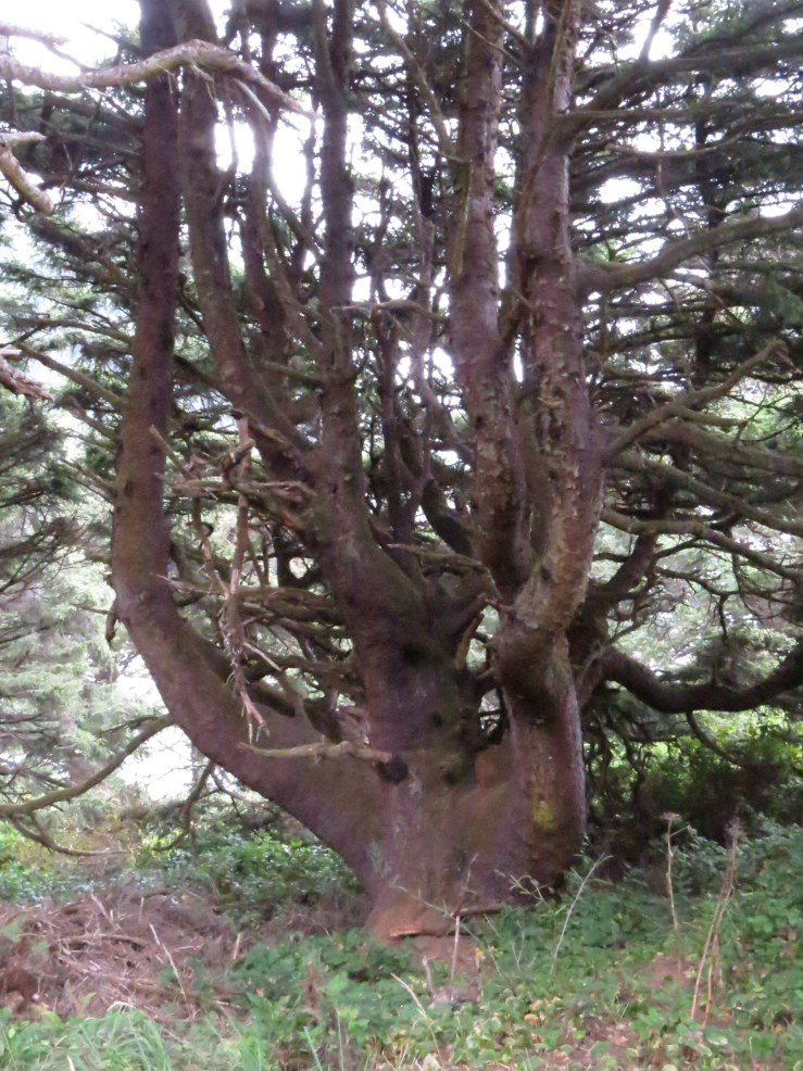 Another octapus tree?