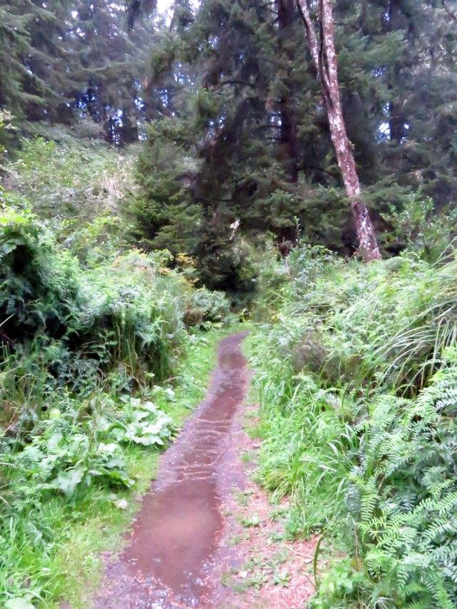 The muddy trail at Cape Arago.