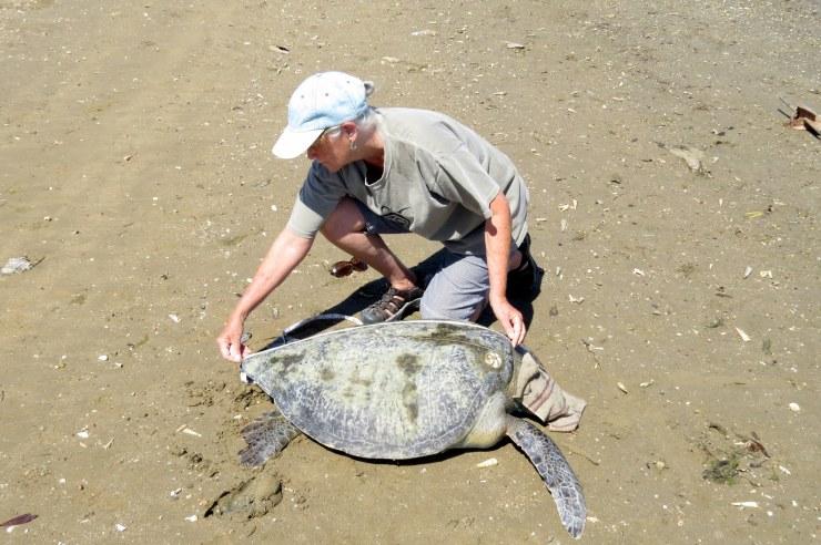 measure turtle me